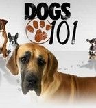 101 Nagykutya 2. évad (2010) online sorozat