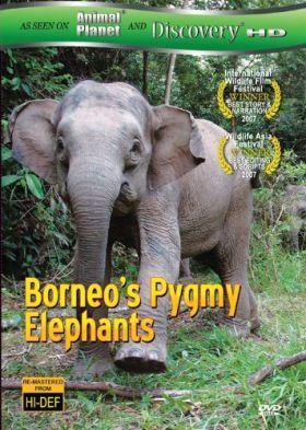 A borneói törpe elefántok (2007) online film
