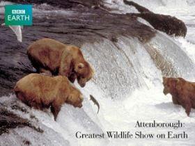 A földkerekség legnagyobb állatparádéja (2000) online film