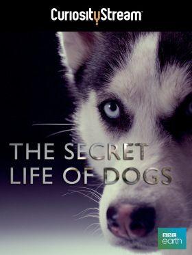 A kutyák titokzatos élete (2013) online film
