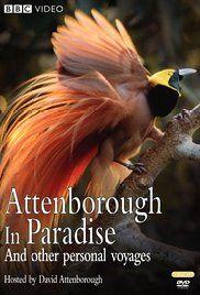 A paradicsommadarak földjén (1996) online film