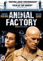 Állati kiképzés (2000) online film