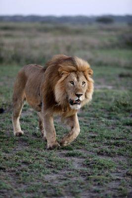Az oroszlánok földjén (1997) online film
