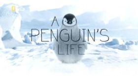 Egy pingvin élete (2013) online film