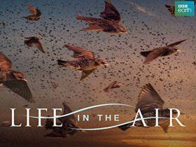 Élet a levegőben (2016) online film
