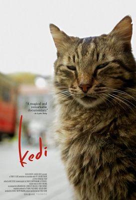 Kedi: Isztambul macskái (2016) online film