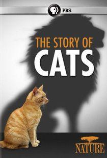 Vadóc házi kedvencünk, a macska 1. évad (2016) online sorozat