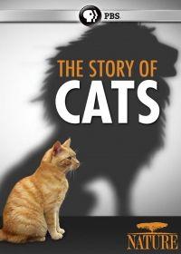 Vadóc házi kedvencünk, a macska (2016) online film